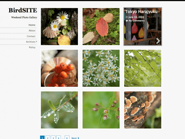 Free BirdSite WordPress theme